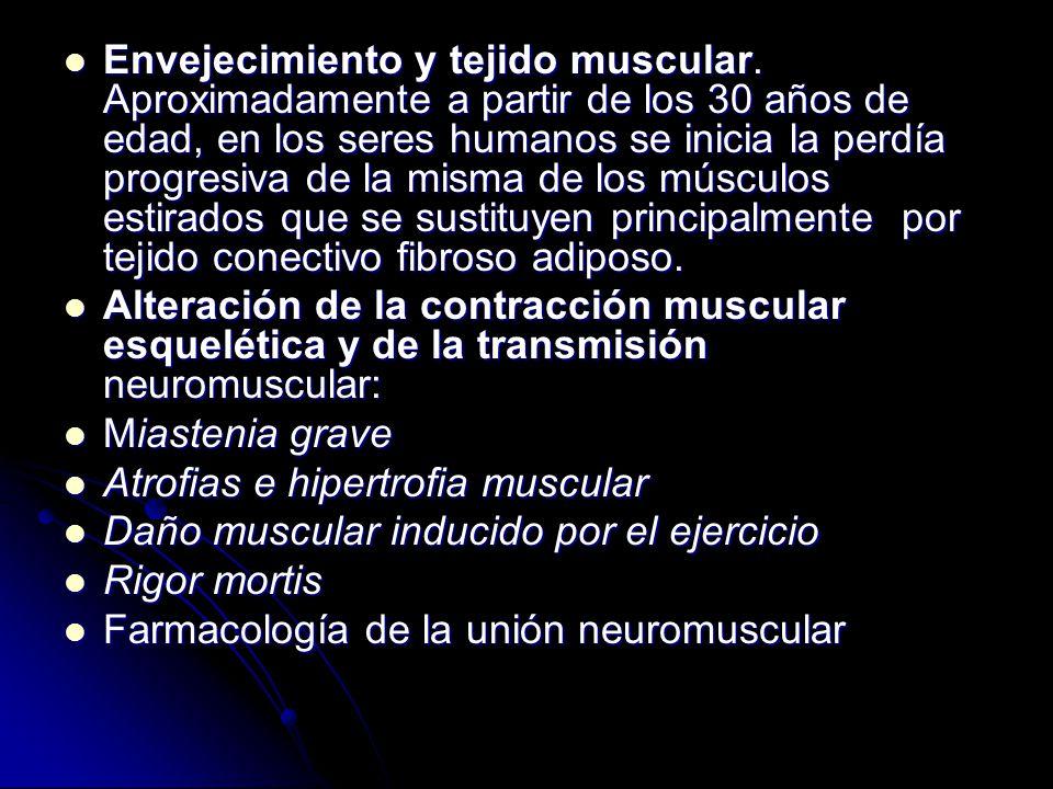 Envejecimiento y tejido muscular. Aproximadamente a partir de los 30 años de edad, en los seres humanos se inicia la perdía progresiva de la misma de