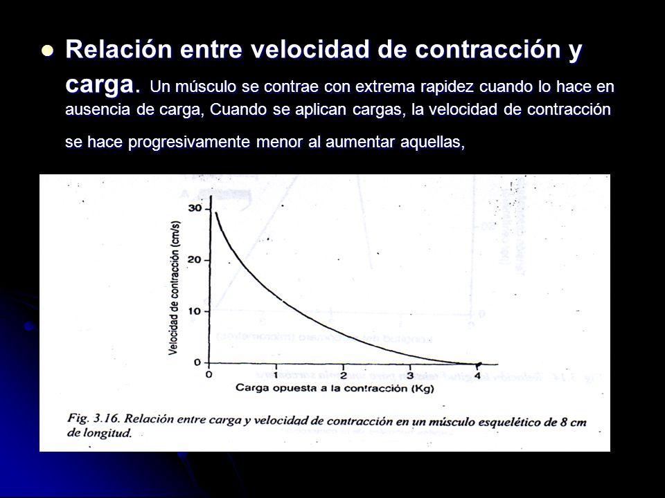 Relación entre velocidad de contracción y carga. Un músculo se contrae con extrema rapidez cuando lo hace en ausencia de carga, Cuando se aplican carg