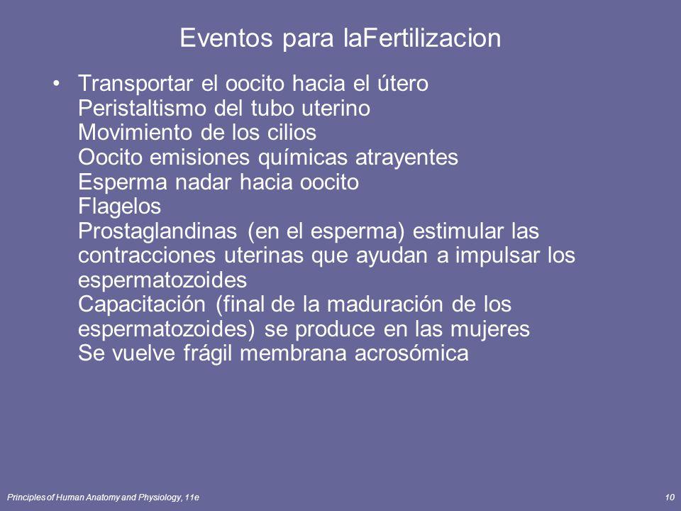 Principles of Human Anatomy and Physiology, 11e10 Eventos para laFertilizacion Transportar el oocito hacia el útero Peristaltismo del tubo uterino Movimiento de los cilios Oocito emisiones químicas atrayentes Esperma nadar hacia oocito Flagelos Prostaglandinas (en el esperma) estimular las contracciones uterinas que ayudan a impulsar los espermatozoides Capacitación (final de la maduración de los espermatozoides) se produce en las mujeres Se vuelve frágil membrana acrosómica
