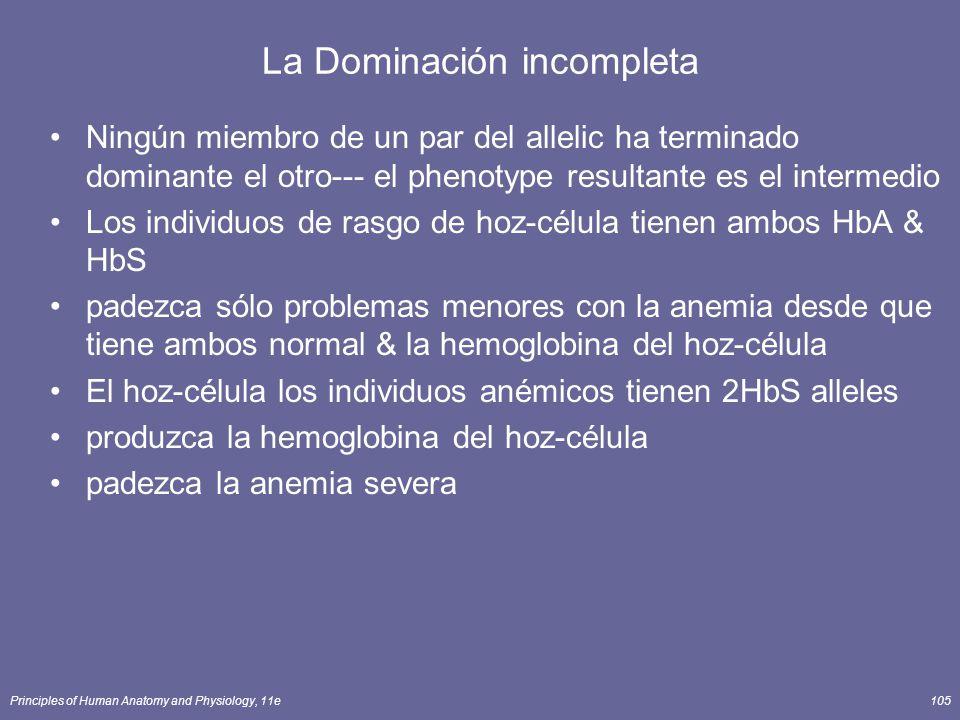 Principles of Human Anatomy and Physiology, 11e105 La Dominación incompleta Ningún miembro de un par del allelic ha terminado dominante el otro--- el