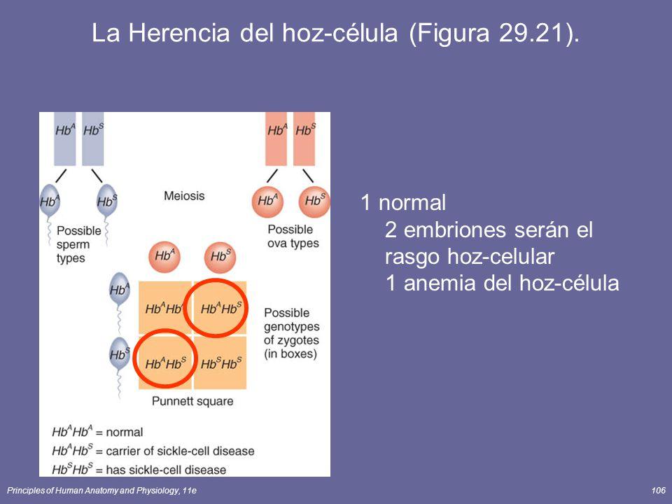 Principles of Human Anatomy and Physiology, 11e106 La Herencia del hoz-célula (Figura 29.21). 1 normal 2 embriones serán el rasgo hoz-celular 1 anemia