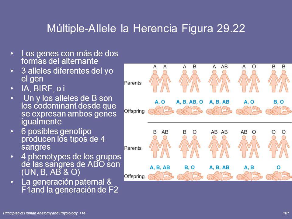 Principles of Human Anatomy and Physiology, 11e107 Múltiple-Allele la Herencia Figura 29.22 Los genes con más de dos formas del alternante 3 alleles diferentes del yo el gen IA, BIRF, o i Un y los alleles de B son los codominant desde que se expresan ambos genes igualmente 6 posibles genotipo producen los tipos de 4 sangres 4 phenotypes de los grupos de las sangres de ABO son (UN, B, AB & O) La generación paternal & F1and la generación de F2