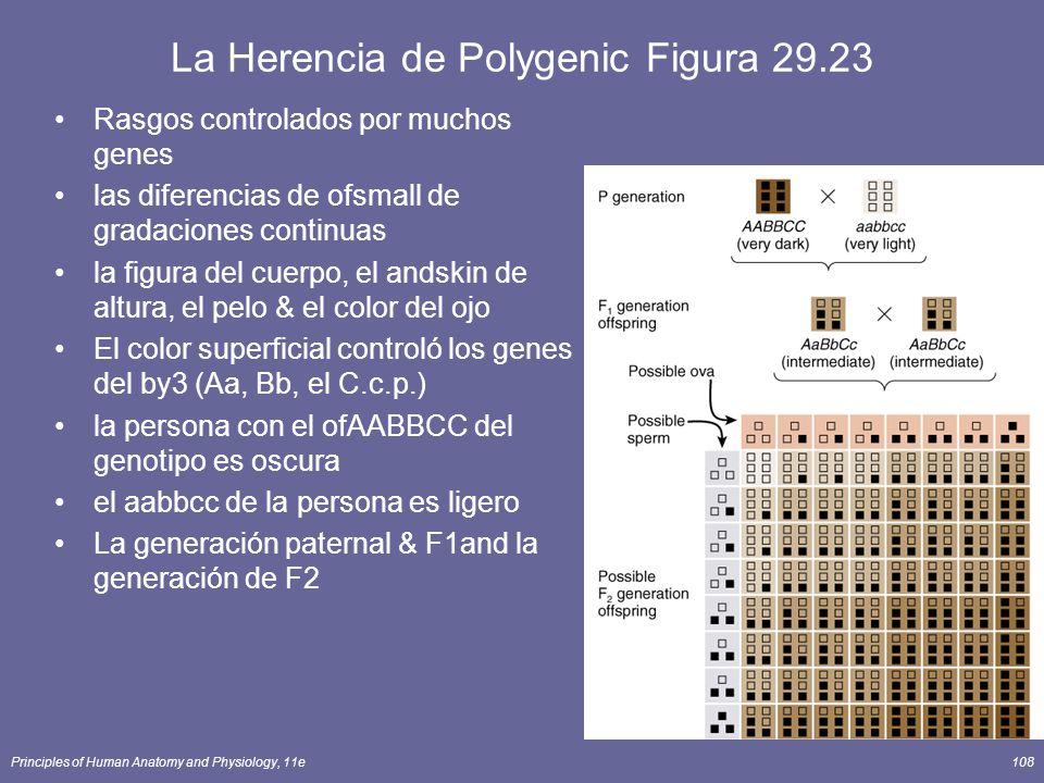 Principles of Human Anatomy and Physiology, 11e108 La Herencia de Polygenic Figura 29.23 Rasgos controlados por muchos genes las diferencias de ofsmall de gradaciones continuas la figura del cuerpo, el andskin de altura, el pelo & el color del ojo El color superficial controló los genes del by3 (Aa, Bb, el C.c.p.) la persona con el ofAABBCC del genotipo es oscura el aabbcc de la persona es ligero La generación paternal & F1and la generación de F2
