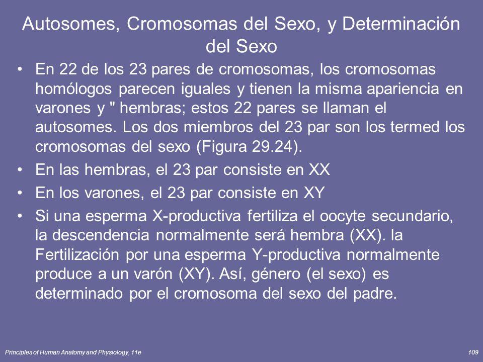 Principles of Human Anatomy and Physiology, 11e109 Autosomes, Cromosomas del Sexo, y Determinación del Sexo En 22 de los 23 pares de cromosomas, los cromosomas homólogos parecen iguales y tienen la misma apariencia en varones y hembras; estos 22 pares se llaman el autosomes.