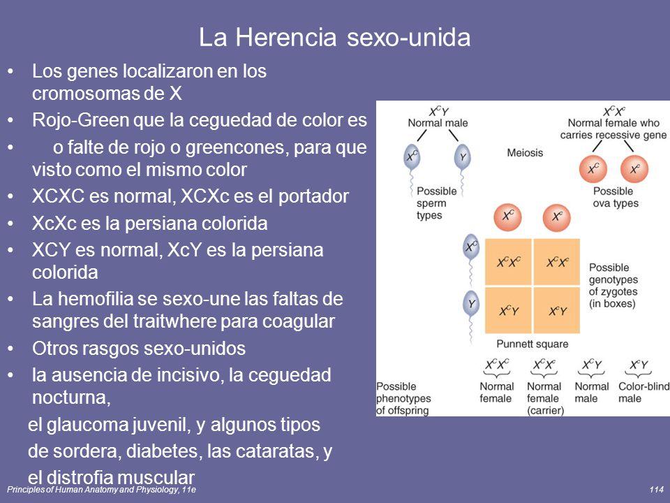 Principles of Human Anatomy and Physiology, 11e114 La Herencia sexo-unida Los genes localizaron en los cromosomas de X Rojo-Green que la ceguedad de c