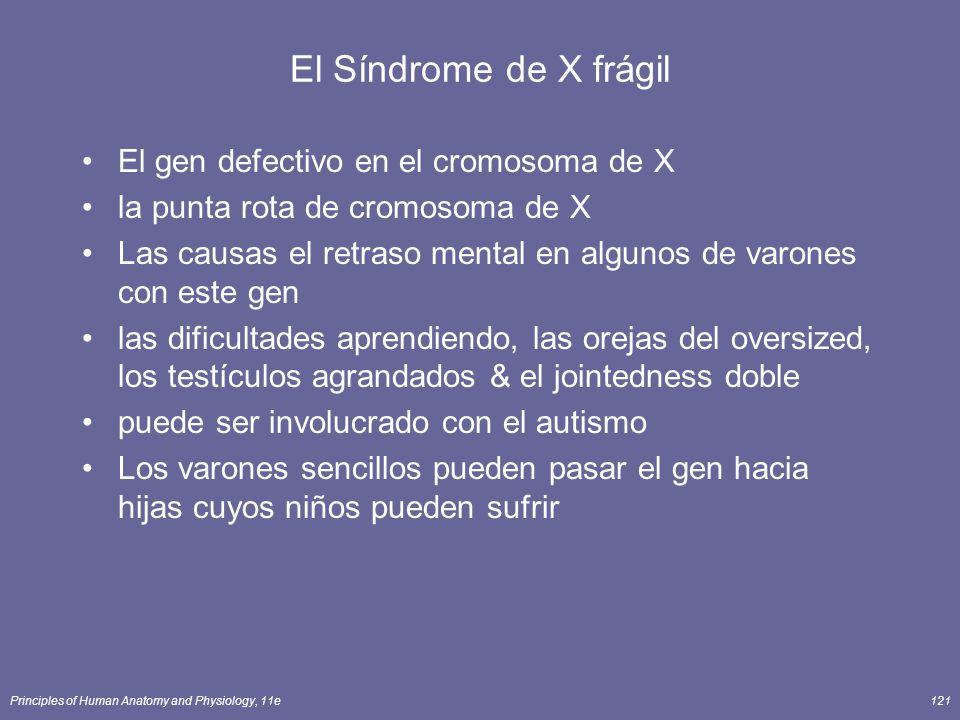 Principles of Human Anatomy and Physiology, 11e121 El Síndrome de X frágil El gen defectivo en el cromosoma de X la punta rota de cromosoma de X Las c