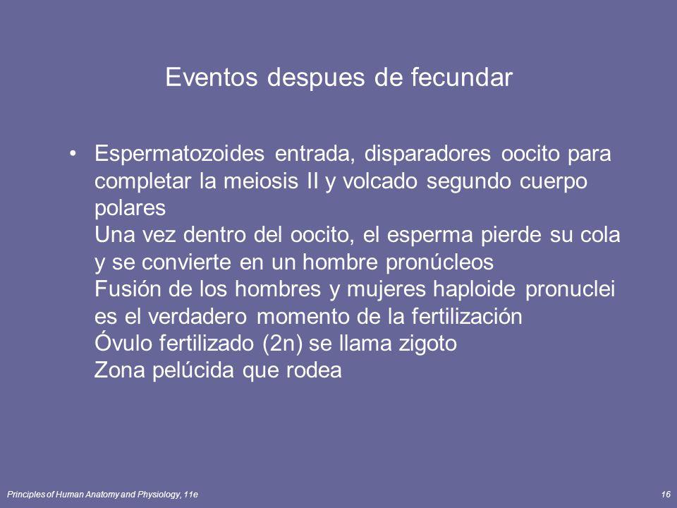 Principles of Human Anatomy and Physiology, 11e16 Eventos despues de fecundar Espermatozoides entrada, disparadores oocito para completar la meiosis II y volcado segundo cuerpo polares Una vez dentro del oocito, el esperma pierde su cola y se convierte en un hombre pronúcleos Fusión de los hombres y mujeres haploide pronuclei es el verdadero momento de la fertilización Óvulo fertilizado (2n) se llama zigoto Zona pelúcida que rodea