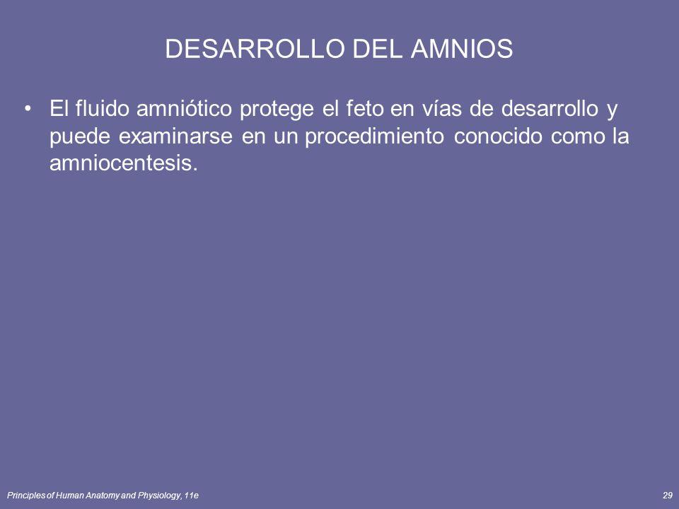 Principles of Human Anatomy and Physiology, 11e29 DESARROLLO DEL AMNIOS El fluido amniótico protege el feto en vías de desarrollo y puede examinarse en un procedimiento conocido como la amniocentesis.