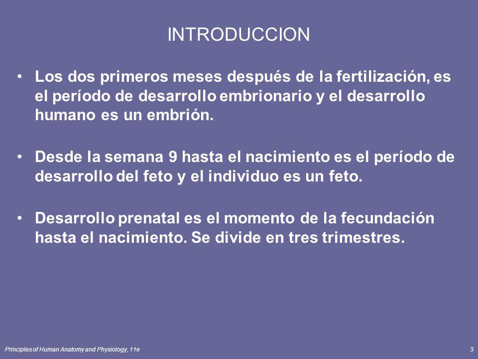 Principles of Human Anatomy and Physiology, 11e3 INTRODUCCION Los dos primeros meses después de la fertilización, es el período de desarrollo embrionario y el desarrollo humano es un embrión.