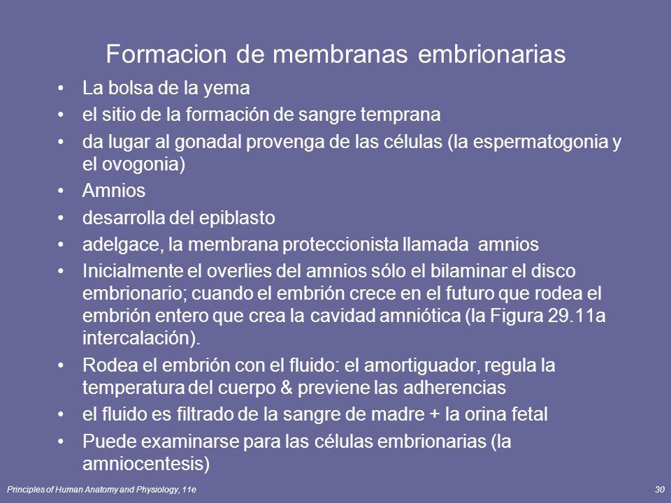 Principles of Human Anatomy and Physiology, 11e30 Formacion de membranas embrionarias La bolsa de la yema el sitio de la formación de sangre temprana da lugar al gonadal provenga de las células (la espermatogonia y el ovogonia) Amnios desarrolla del epiblasto adelgace, la membrana proteccionista llamada amnios Inicialmente el overlies del amnios sólo el bilaminar el disco embrionario; cuando el embrión crece en el futuro que rodea el embrión entero que crea la cavidad amniótica (la Figura 29.11a intercalación).