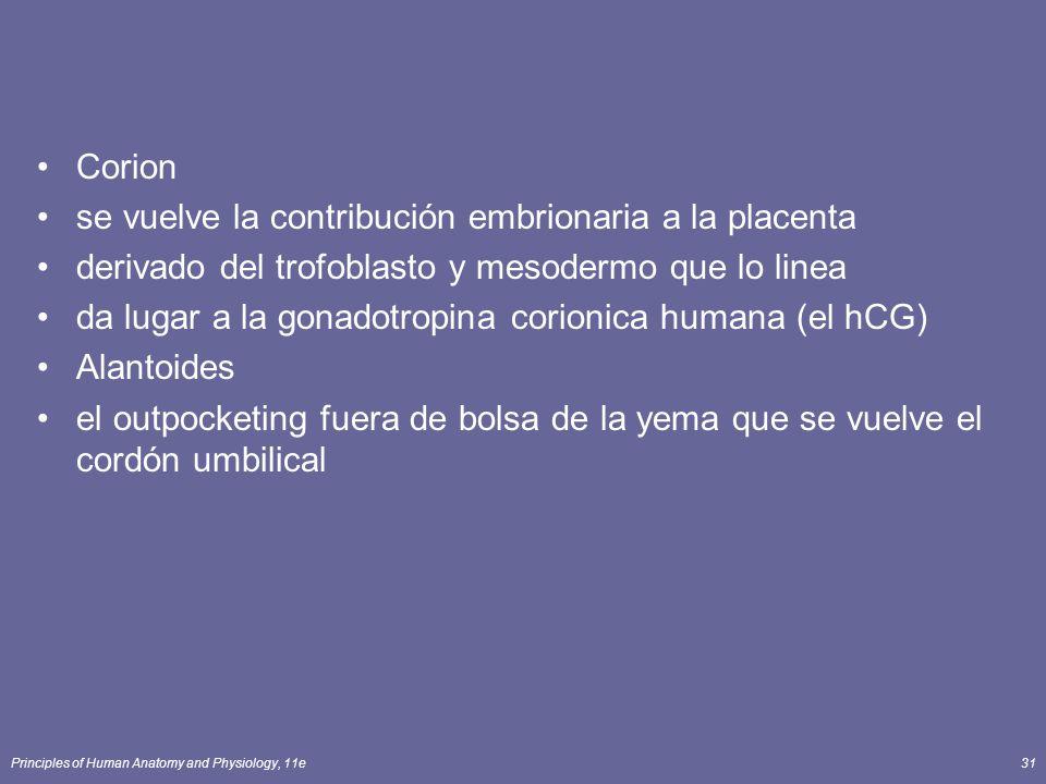 Principles of Human Anatomy and Physiology, 11e31 Corion se vuelve la contribución embrionaria a la placenta derivado del trofoblasto y mesodermo que lo linea da lugar a la gonadotropina corionica humana (el hCG) Alantoides el outpocketing fuera de bolsa de la yema que se vuelve el cordón umbilical
