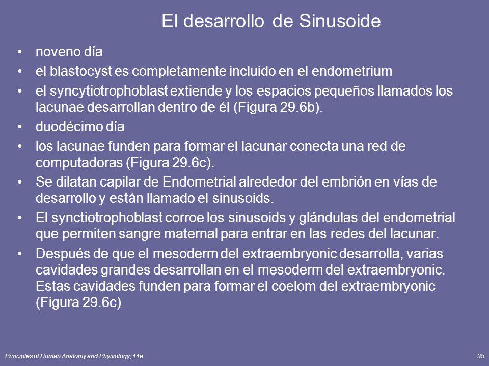 Principles of Human Anatomy and Physiology, 11e35 El desarrollo de Sinusoide noveno día el blastocyst es completamente incluido en el endometrium el syncytiotrophoblast extiende y los espacios pequeños llamados los lacunae desarrollan dentro de él (Figura 29.6b).