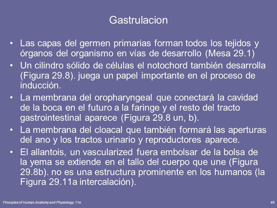 Principles of Human Anatomy and Physiology, 11e49 Gastrulacion Las capas del germen primarias forman todos los tejidos y órganos del organismo en vías de desarrollo (Mesa 29.1) Un cilindro sólido de células el notochord también desarrolla (Figura 29.8).