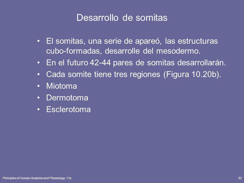 Principles of Human Anatomy and Physiology, 11e52 Desarrollo de somitas El somitas, una serie de apareó, las estructuras cubo-formadas, desarrolle del mesodermo.