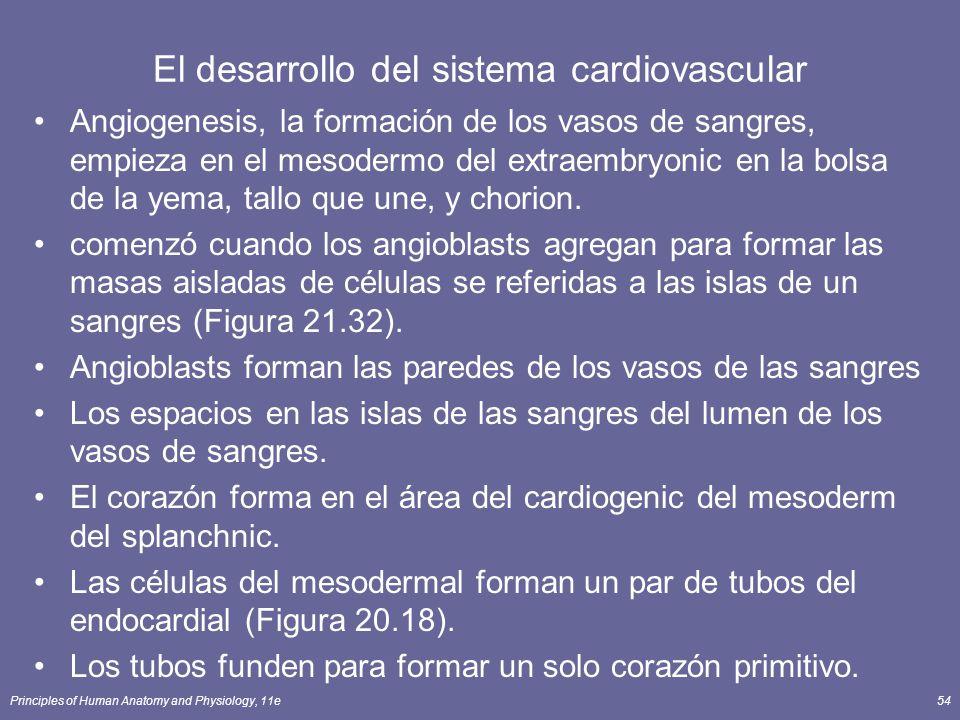 Principles of Human Anatomy and Physiology, 11e54 El desarrollo del sistema cardiovascular Angiogenesis, la formación de los vasos de sangres, empieza en el mesodermo del extraembryonic en la bolsa de la yema, tallo que une, y chorion.