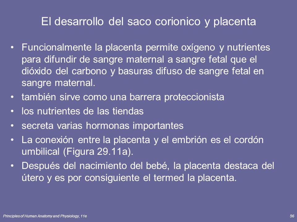 Principles of Human Anatomy and Physiology, 11e56 El desarrollo del saco corionico y placenta Funcionalmente la placenta permite oxígeno y nutrientes para difundir de sangre maternal a sangre fetal que el dióxido del carbono y basuras difuso de sangre fetal en sangre maternal.