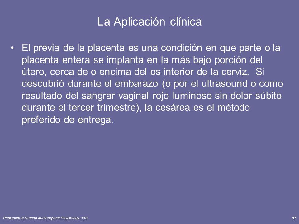 Principles of Human Anatomy and Physiology, 11e57 La Aplicación clínica El previa de la placenta es una condición en que parte o la placenta entera se implanta en la más bajo porción del útero, cerca de o encima del os interior de la cerviz.
