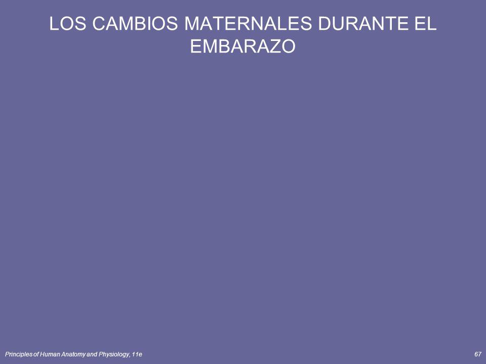 Principles of Human Anatomy and Physiology, 11e67 LOS CAMBIOS MATERNALES DURANTE EL EMBARAZO