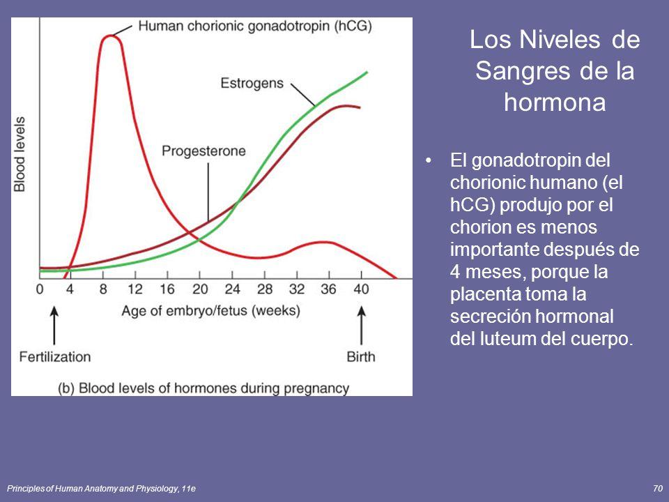 Principles of Human Anatomy and Physiology, 11e70 Los Niveles de Sangres de la hormona El gonadotropin del chorionic humano (el hCG) produjo por el chorion es menos importante después de 4 meses, porque la placenta toma la secreción hormonal del luteum del cuerpo.