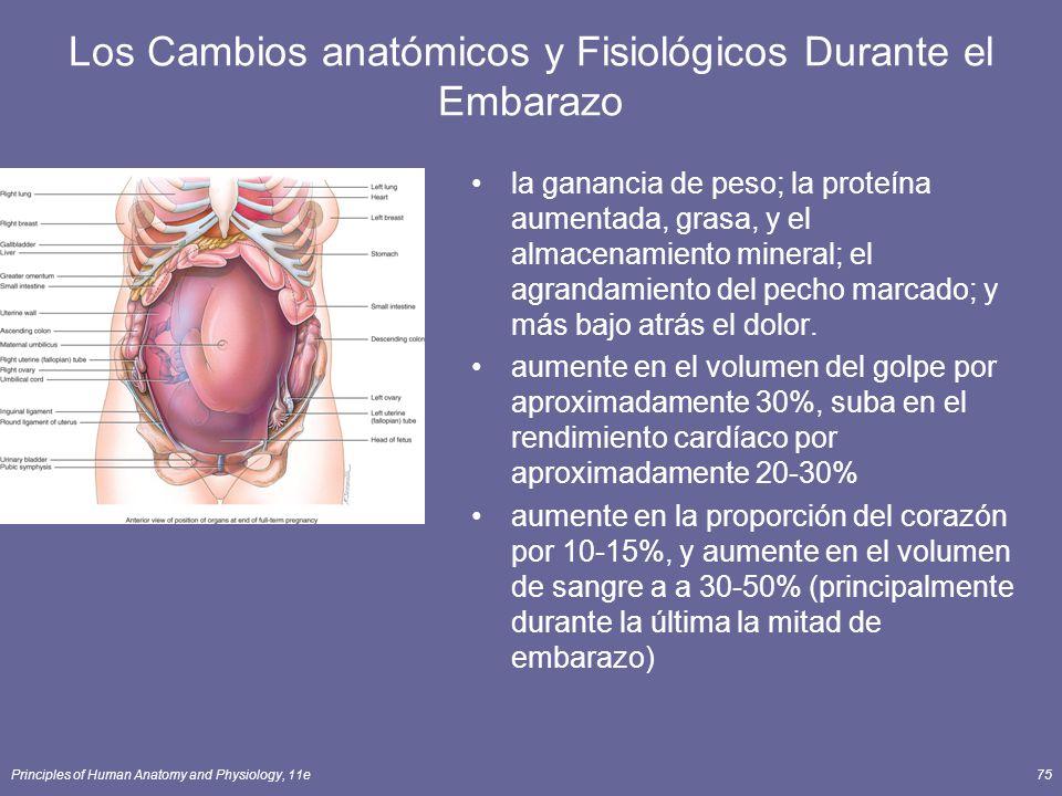 Principles of Human Anatomy and Physiology, 11e75 Los Cambios anatómicos y Fisiológicos Durante el Embarazo la ganancia de peso; la proteína aumentada, grasa, y el almacenamiento mineral; el agrandamiento del pecho marcado; y más bajo atrás el dolor.