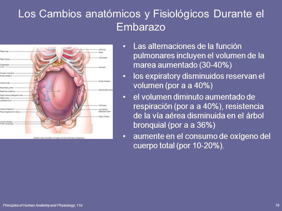 Principles of Human Anatomy and Physiology, 11e76 Los Cambios anatómicos y Fisiológicos Durante el Embarazo Las alternaciones de la función pulmonares incluyen el volumen de la marea aumentado (30-40%) los expiratory disminuidos reservan el volumen (por a a 40%) el volumen diminuto aumentado de respiración (por a a 40%), resistencia de la vía aérea disminuida en el árbol bronquial (por a a 36%) aumente en el consumo de oxígeno del cuerpo total (por 10-20%).
