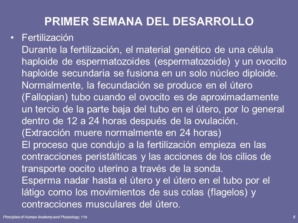 Principles of Human Anatomy and Physiology, 11e8 PRIMER SEMANA DEL DESARROLLO Fertilización Durante la fertilización, el material genético de una célula haploide de espermatozoides (espermatozoide) y un ovocito haploide secundaria se fusiona en un solo núcleo diploide.