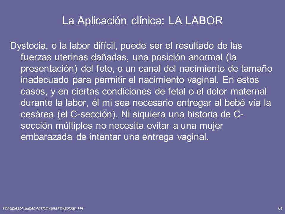Principles of Human Anatomy and Physiology, 11e84 La Aplicación clínica: LA LABOR Dystocia, o la labor difícil, puede ser el resultado de las fuerzas uterinas dañadas, una posición anormal (la presentación) del feto, o un canal del nacimiento de tamaño inadecuado para permitir el nacimiento vaginal.