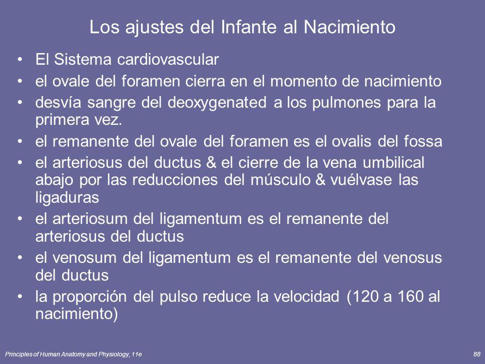 Principles of Human Anatomy and Physiology, 11e88 Los ajustes del Infante al Nacimiento El Sistema cardiovascular el ovale del foramen cierra en el mo