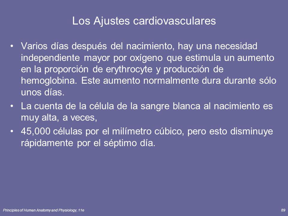 Principles of Human Anatomy and Physiology, 11e89 Los Ajustes cardiovasculares Varios días después del nacimiento, hay una necesidad independiente mayor por oxígeno que estimula un aumento en la proporción de erythrocyte y producción de hemoglobina.