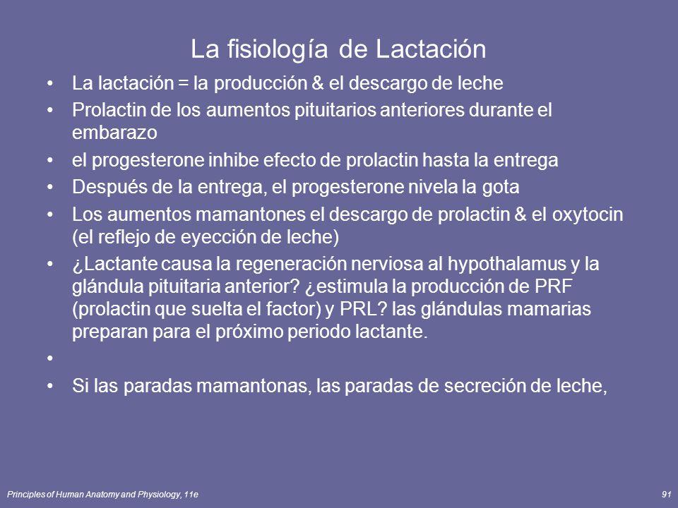 Principles of Human Anatomy and Physiology, 11e91 La fisiología de Lactación La lactación = la producción & el descargo de leche Prolactin de los aumentos pituitarios anteriores durante el embarazo el progesterone inhibe efecto de prolactin hasta la entrega Después de la entrega, el progesterone nivela la gota Los aumentos mamantones el descargo de prolactin & el oxytocin (el reflejo de eyección de leche) ¿Lactante causa la regeneración nerviosa al hypothalamus y la glándula pituitaria anterior.