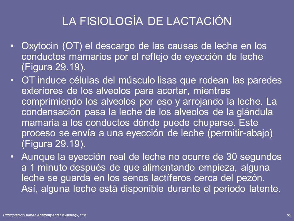 Principles of Human Anatomy and Physiology, 11e92 LA FISIOLOGÍA DE LACTACIÓN Oxytocin (OT) el descargo de las causas de leche en los conductos mamarios por el reflejo de eyección de leche (Figura 29.19).