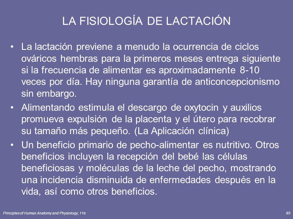 Principles of Human Anatomy and Physiology, 11e95 LA FISIOLOGÍA DE LACTACIÓN La lactación previene a menudo la ocurrencia de ciclos ováricos hembras para la primeros meses entrega siguiente si la frecuencia de alimentar es aproximadamente 8-10 veces por día.