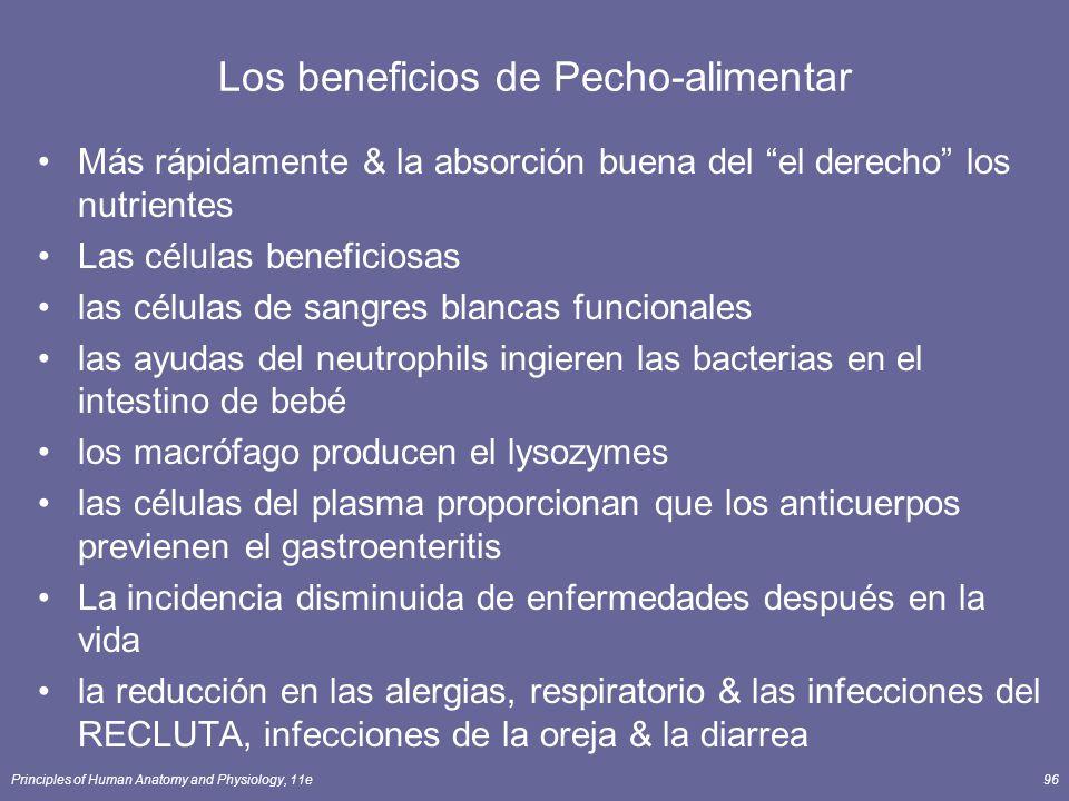 Principles of Human Anatomy and Physiology, 11e96 Los beneficios de Pecho-alimentar Más rápidamente & la absorción buena del el derecho los nutrientes Las células beneficiosas las células de sangres blancas funcionales las ayudas del neutrophils ingieren las bacterias en el intestino de bebé los macrófago producen el lysozymes las células del plasma proporcionan que los anticuerpos previenen el gastroenteritis La incidencia disminuida de enfermedades después en la vida la reducción en las alergias, respiratorio & las infecciones del RECLUTA, infecciones de la oreja & la diarrea
