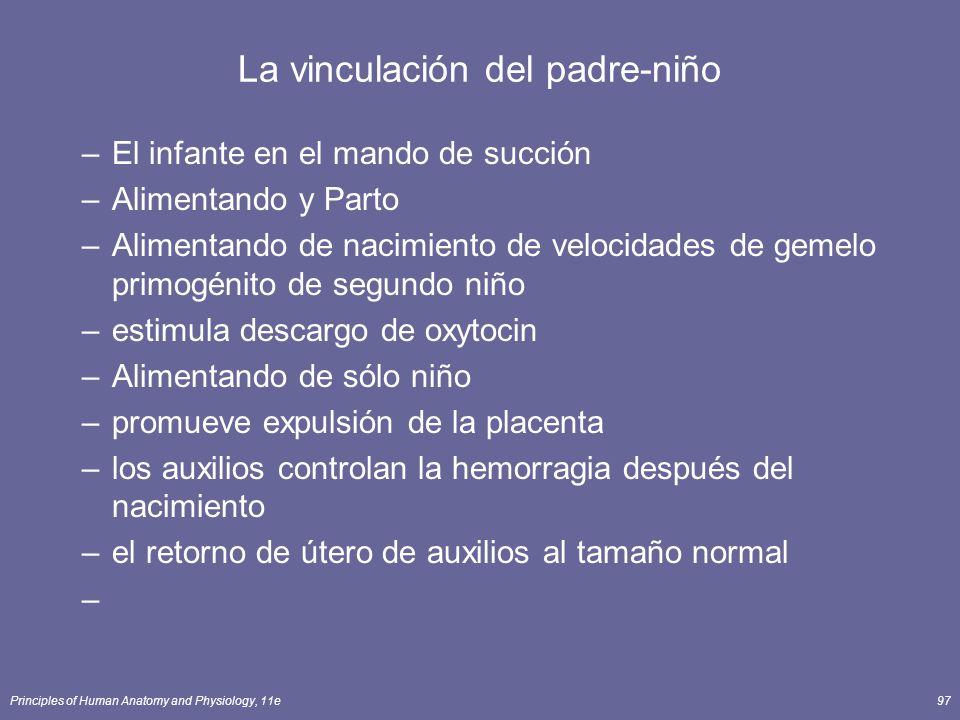 Principles of Human Anatomy and Physiology, 11e97 La vinculación del padre-niño –El infante en el mando de succión –Alimentando y Parto –Alimentando d