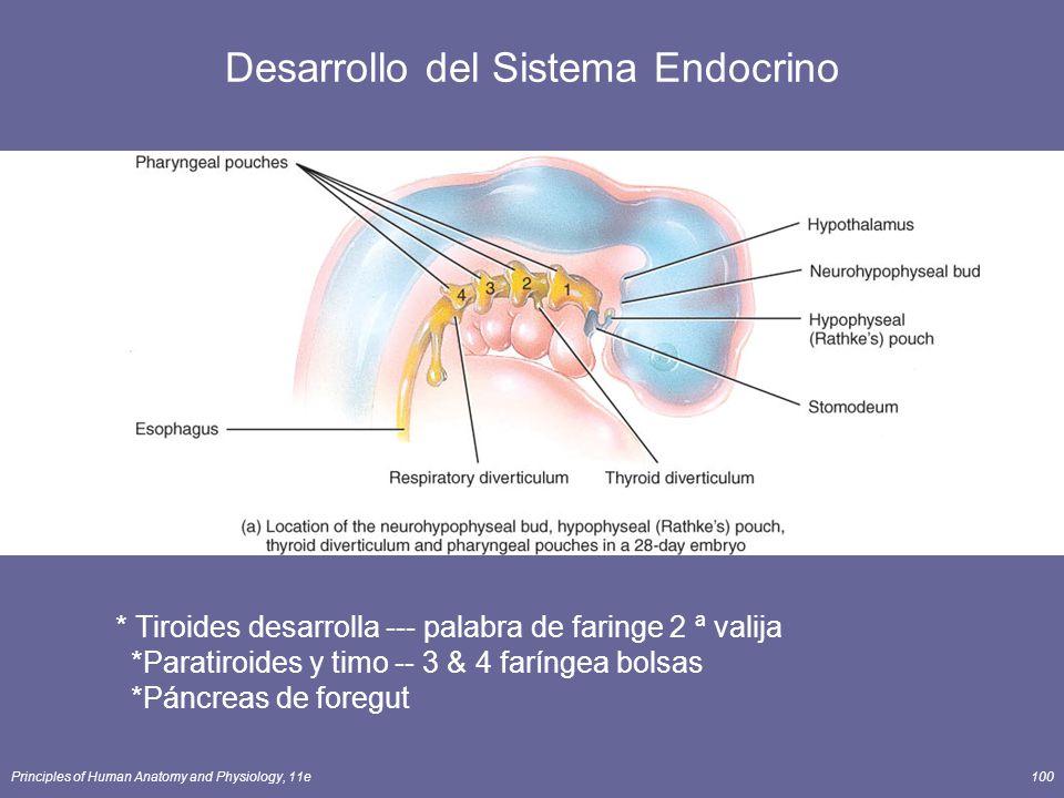 Principles of Human Anatomy and Physiology, 11e100 * Tiroides desarrolla --- palabra de faringe 2 ª valija *Paratiroides y timo -- 3 & 4 faríngea bols