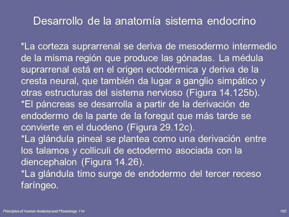 Principles of Human Anatomy and Physiology, 11e102 Desarrollo de la anatomía sistema endocrino *La corteza suprarrenal se deriva de mesodermo intermed