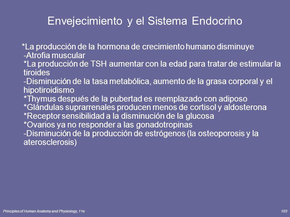 Principles of Human Anatomy and Physiology, 11e103 Envejecimiento y el Sistema Endocrino *La producción de la hormona de crecimiento humano disminuye