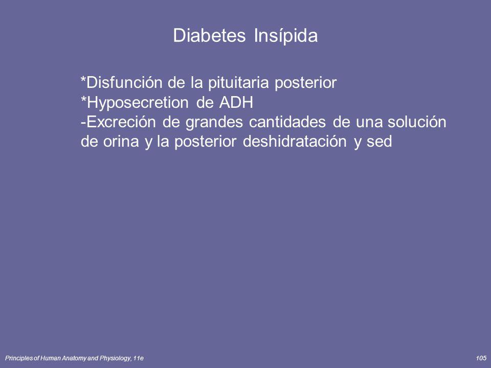 Principles of Human Anatomy and Physiology, 11e105 Diabetes Insípida *Disfunción de la pituitaria posterior *Hyposecretion de ADH -Excreción de grande
