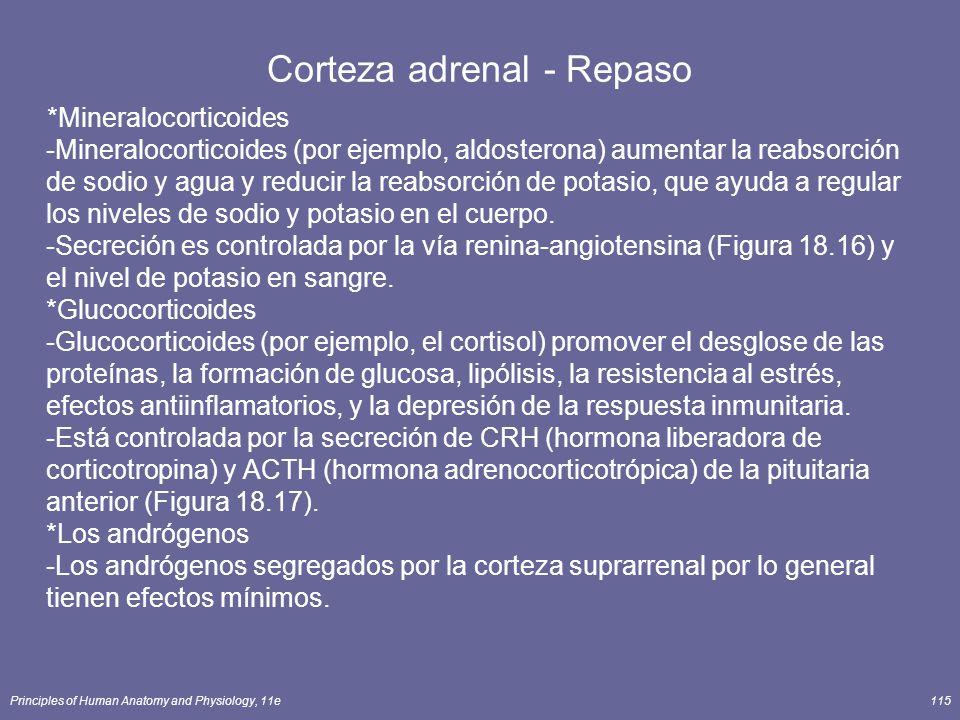 Principles of Human Anatomy and Physiology, 11e115 Corteza adrenal - Repaso *Mineralocorticoides -Mineralocorticoides (por ejemplo, aldosterona) aumen