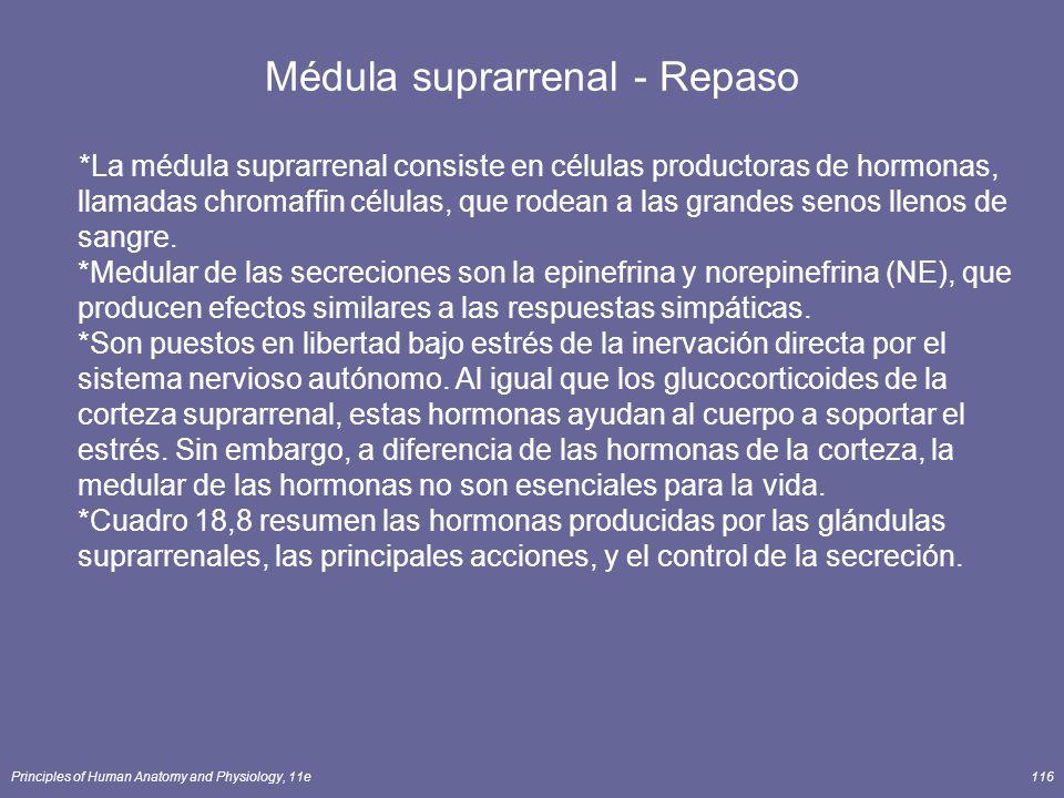 Principles of Human Anatomy and Physiology, 11e116 Médula suprarrenal - Repaso *La médula suprarrenal consiste en células productoras de hormonas, lla