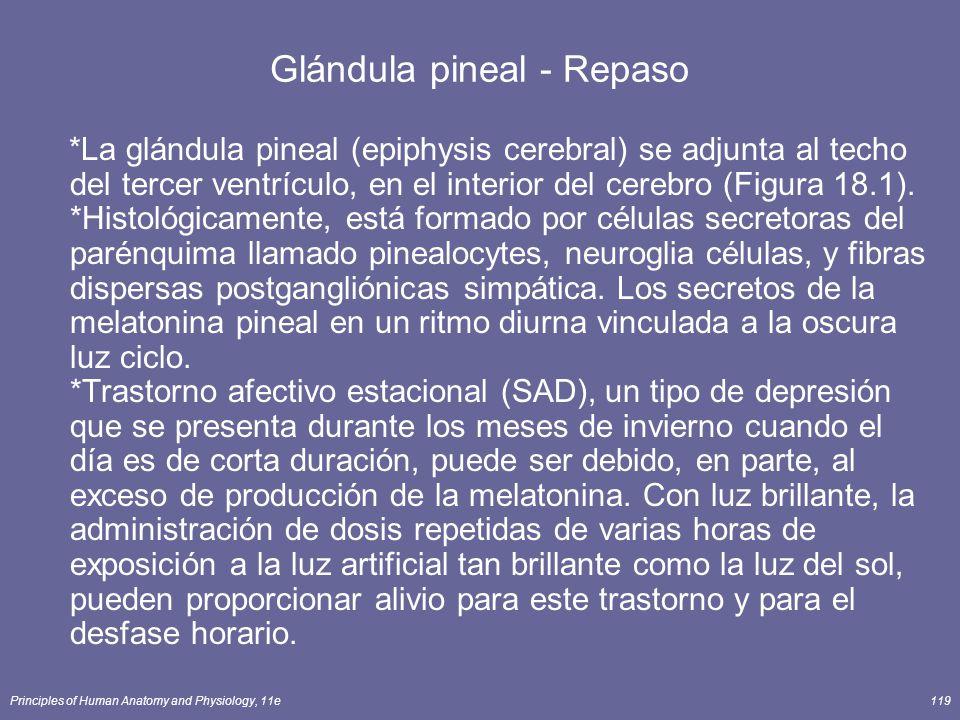 Principles of Human Anatomy and Physiology, 11e119 Glándula pineal - Repaso *La glándula pineal (epiphysis cerebral) se adjunta al techo del tercer ve
