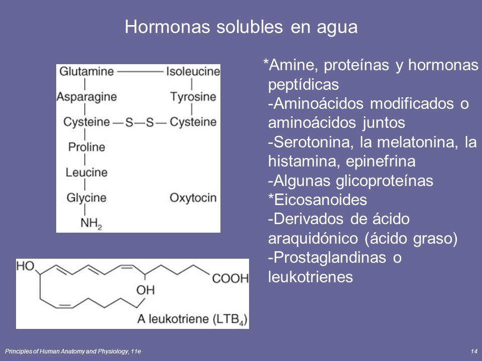Principles of Human Anatomy and Physiology, 11e14 Hormonas solubles en agua *Amine, proteínas y hormonas peptídicas -Aminoácidos modificados o aminoác