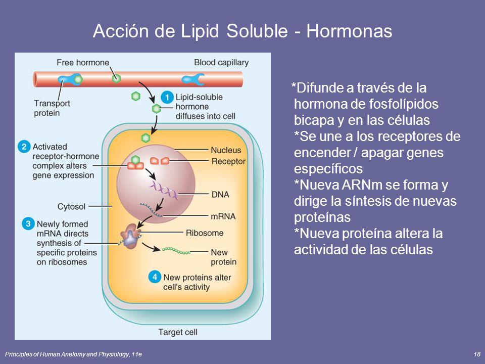 Principles of Human Anatomy and Physiology, 11e18 Acción de Lipid Soluble - Hormonas *Difunde a través de la hormona de fosfolípidos bicapa y en las c