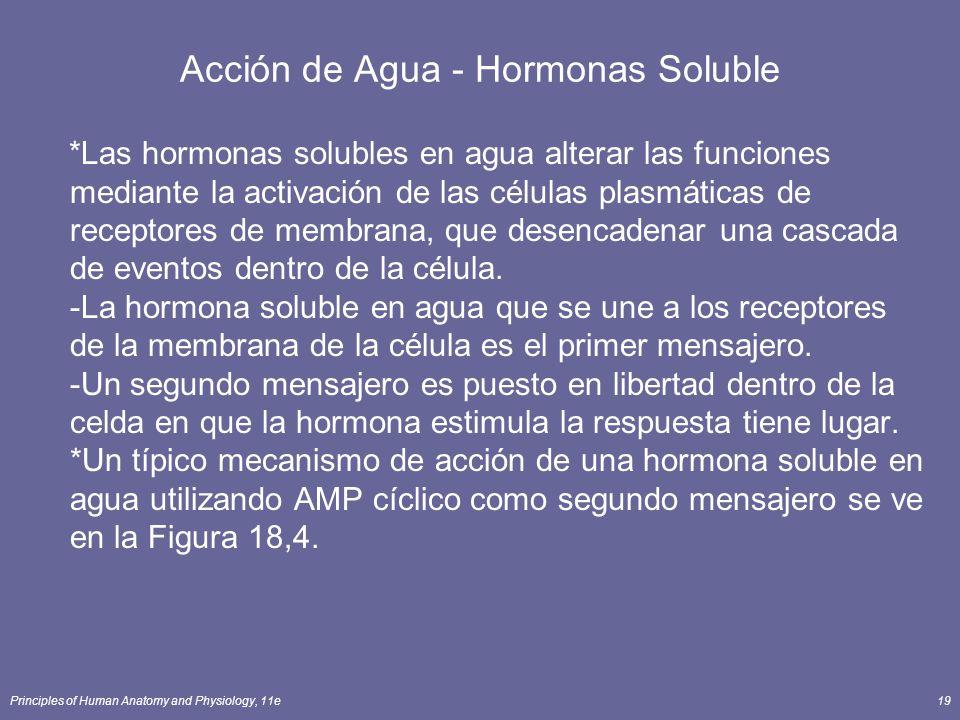 Principles of Human Anatomy and Physiology, 11e19 Acción de Agua - Hormonas Soluble *Las hormonas solubles en agua alterar las funciones mediante la a