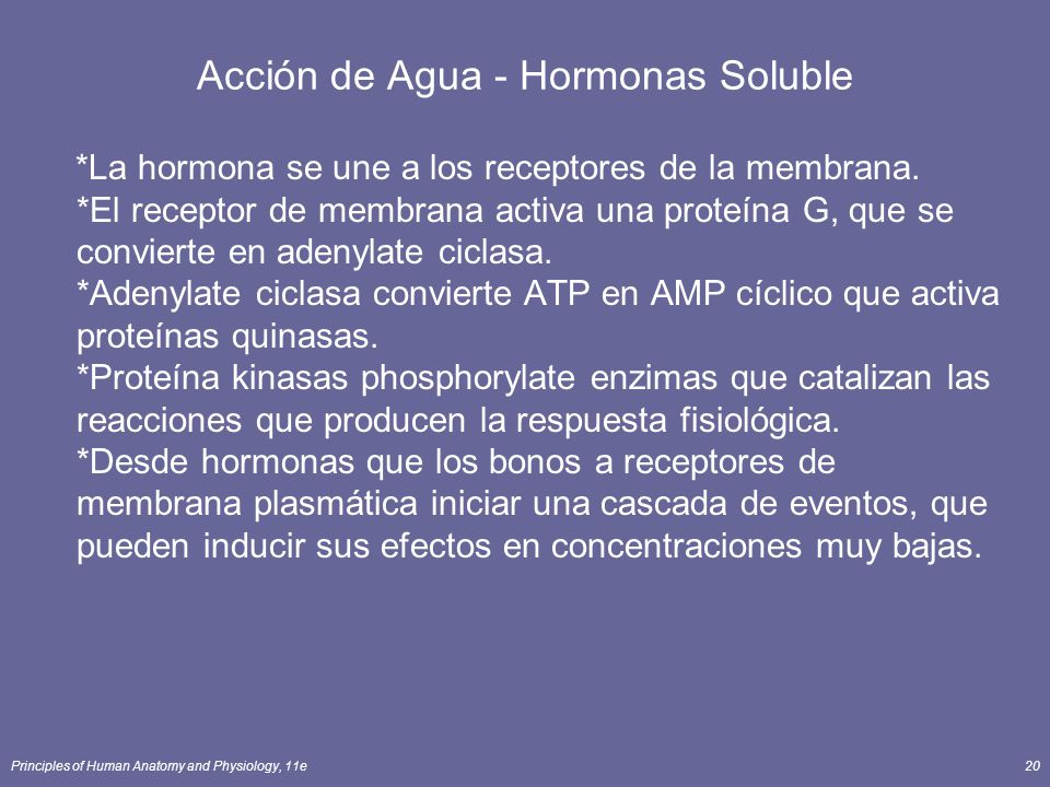Principles of Human Anatomy and Physiology, 11e20 Acción de Agua - Hormonas Soluble *La hormona se une a los receptores de la membrana. *El receptor d