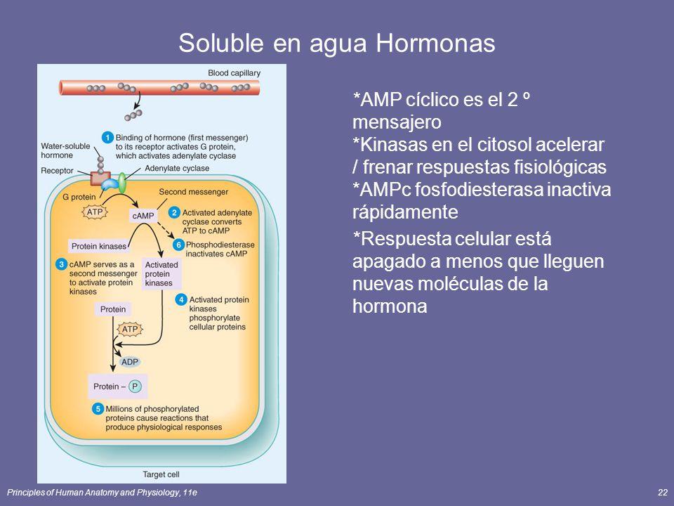Principles of Human Anatomy and Physiology, 11e22 Soluble en agua Hormonas *AMP cíclico es el 2 º mensajero *Kinasas en el citosol acelerar / frenar r