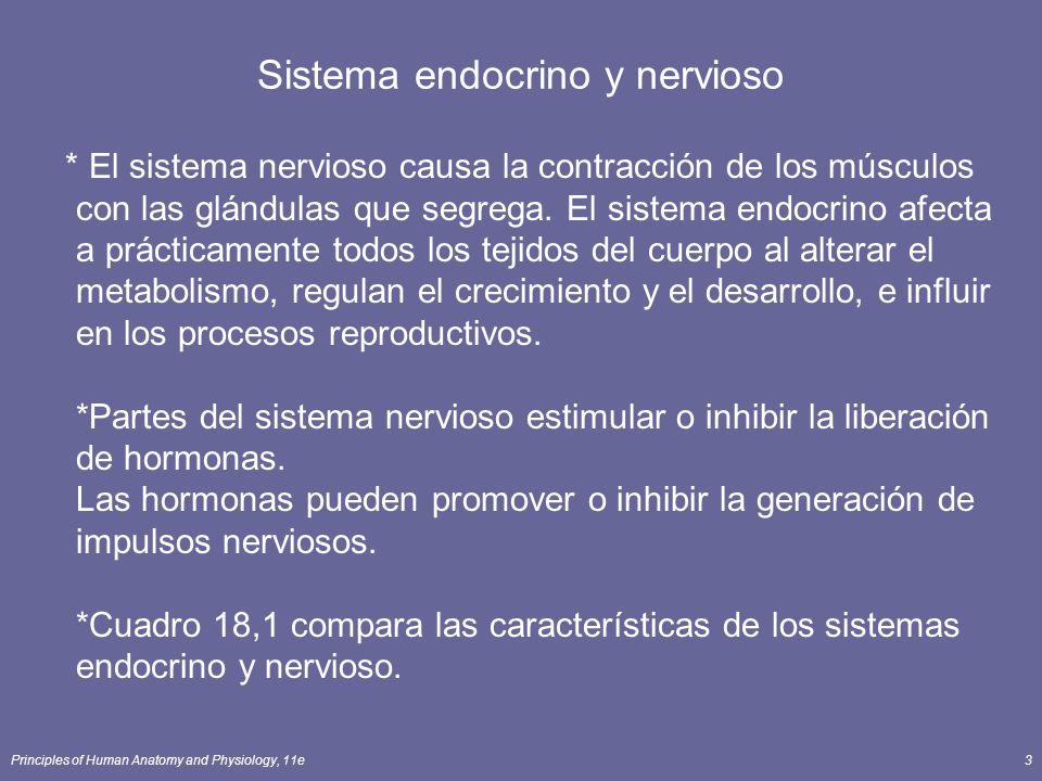Principles of Human Anatomy and Physiology, 11e3 Sistema endocrino y nervioso * El sistema nervioso causa la contracción de los músculos con las glánd
