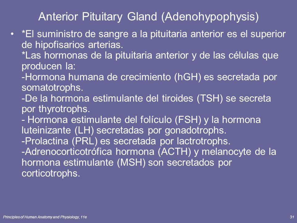 Principles of Human Anatomy and Physiology, 11e31 Anterior Pituitary Gland (Adenohypophysis) *El suministro de sangre a la pituitaria anterior es el s