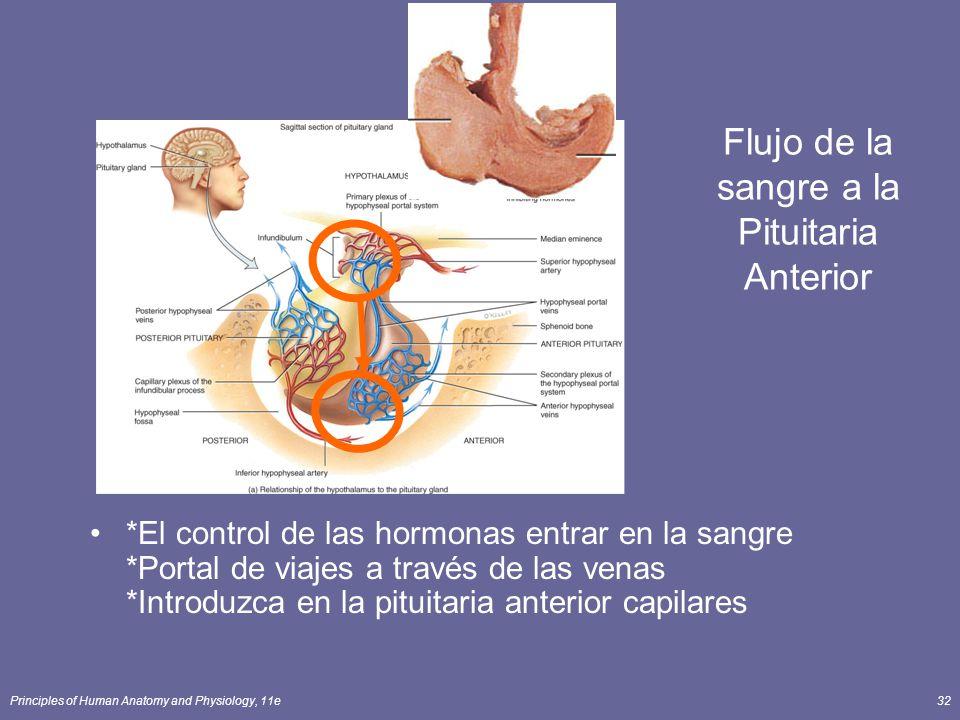 Principles of Human Anatomy and Physiology, 11e32 Flujo de la sangre a la Pituitaria Anterior *El control de las hormonas entrar en la sangre *Portal