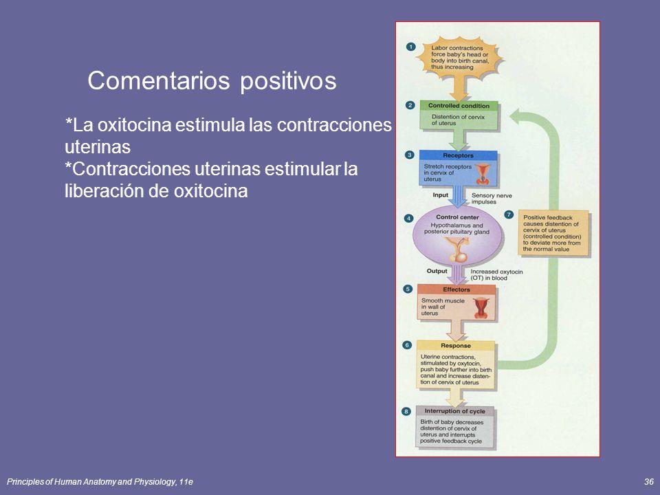 Principles of Human Anatomy and Physiology, 11e36 Comentarios positivos *La oxitocina estimula las contracciones uterinas *Contracciones uterinas esti